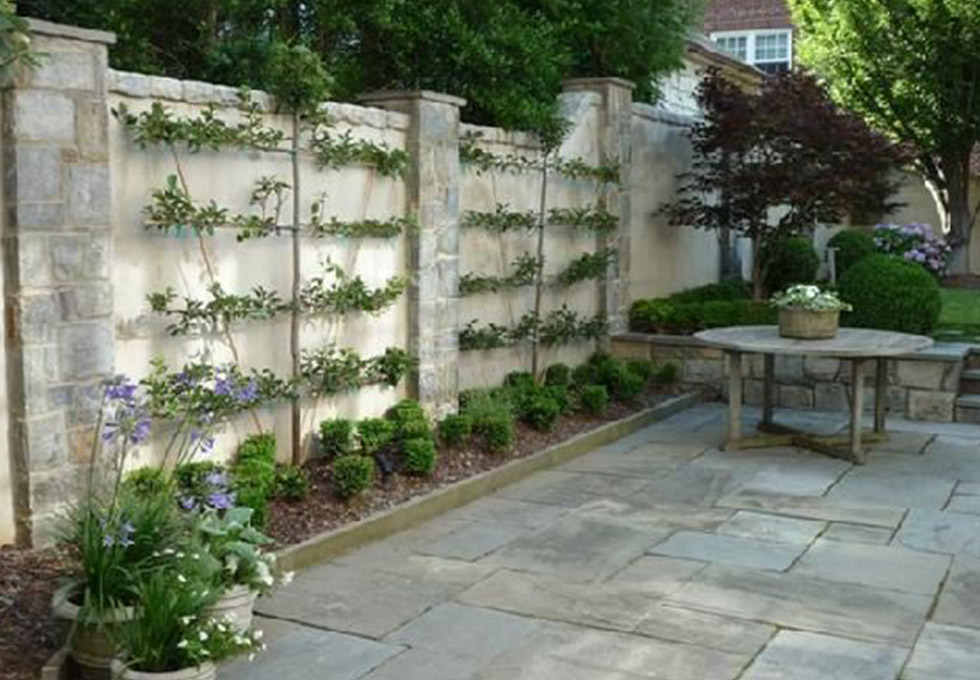 Espalier fruit trees on wall