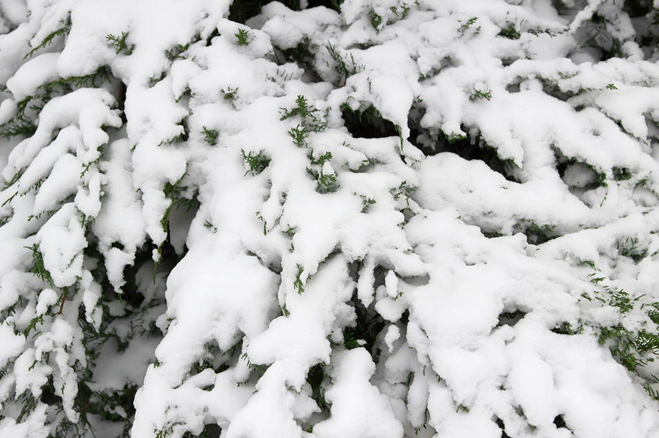 Stop snow and cold weather damaging plants in your garden