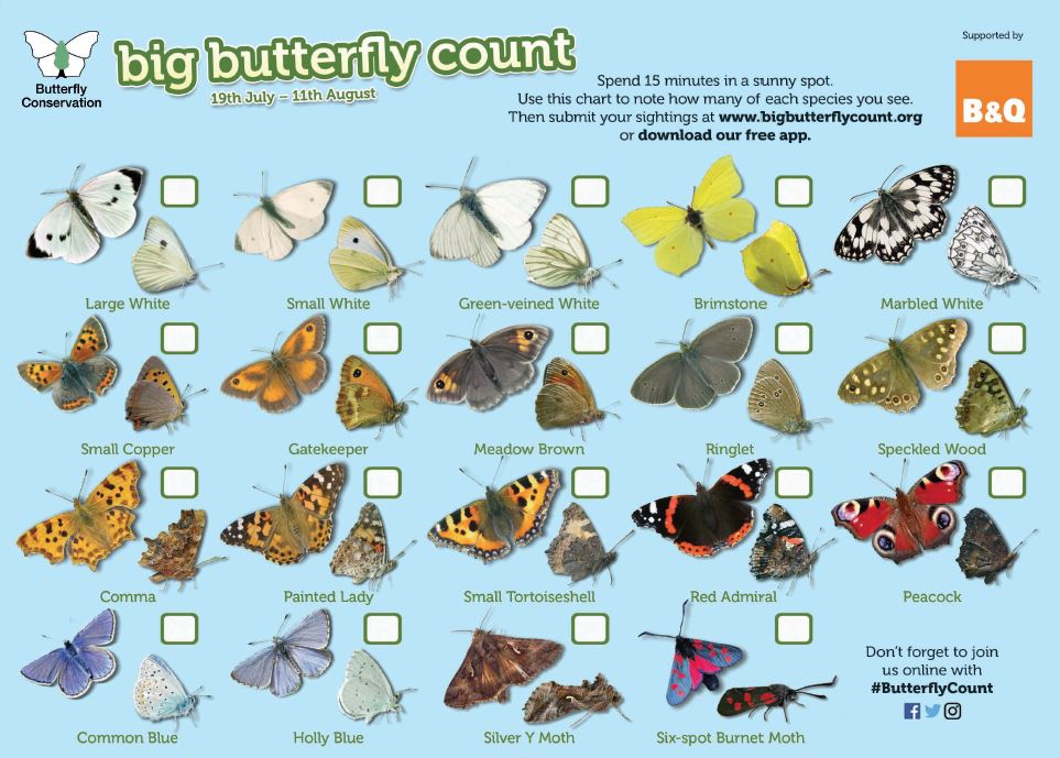 big butterfly count 2019 chart