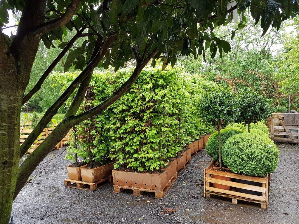 pot plants & container grown