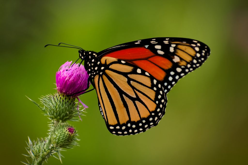 colourful butterfly on wild flower