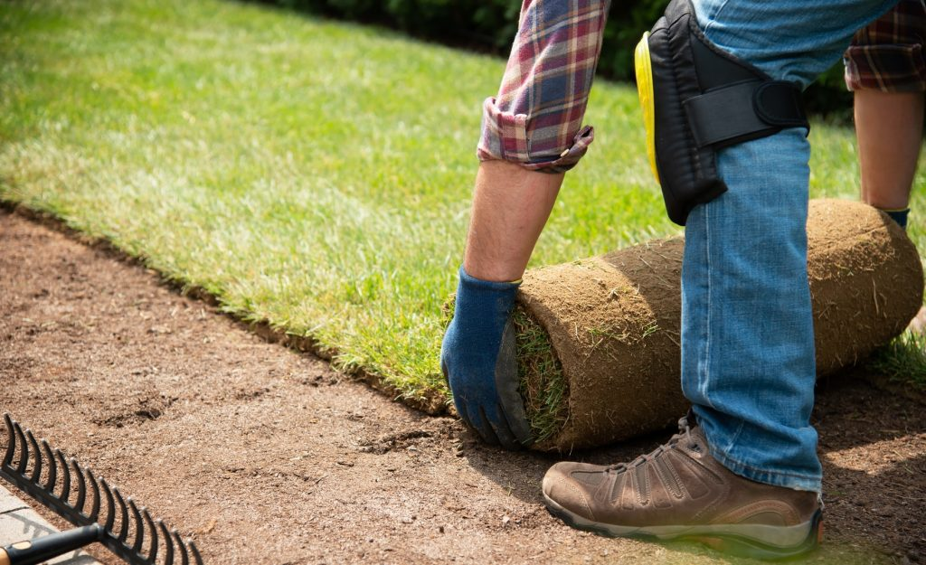 putting down real turf in garden