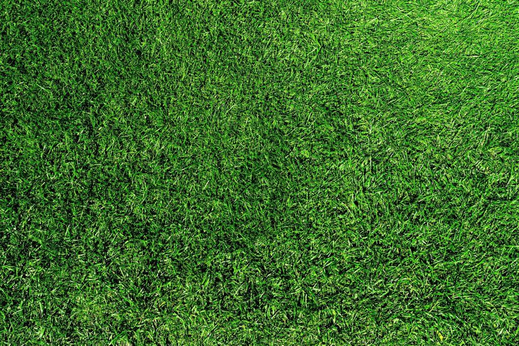 green healthy lush grass