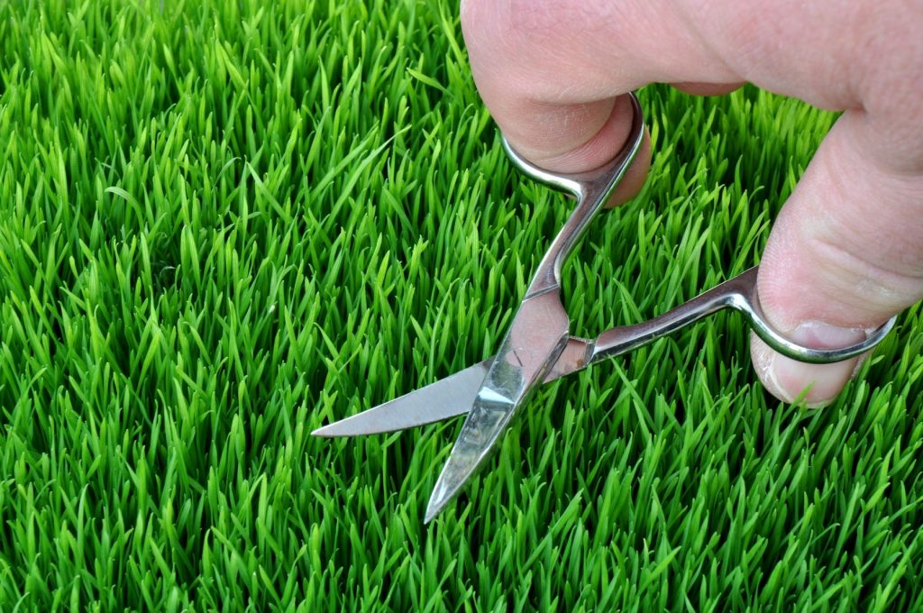 someone hand cutting lawn with scissors