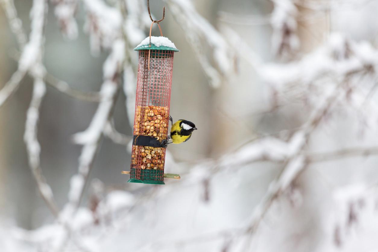 Feeding garden brids in winter