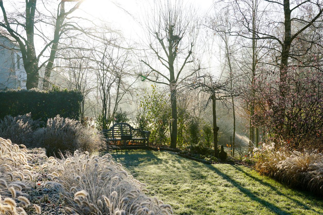 Frosty winter garden